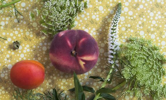 peche abricot mimosa